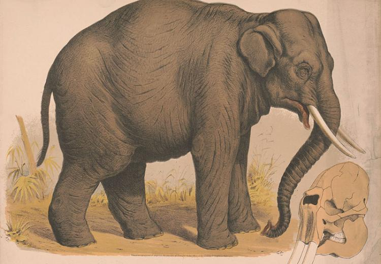 george orwells essay on his life in burma shooting an elephant