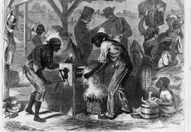 African American slaves using cotton gin, drawing by William L. Sheppard.